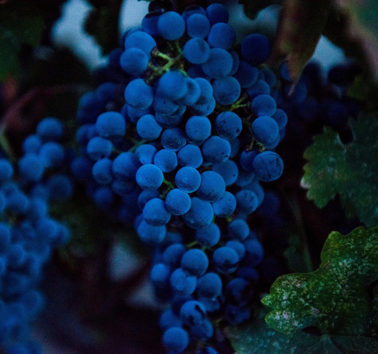 Clark-Claudon Vineyards